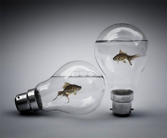 These light bulbs appear to be actually full of water. The bubbles in the water were likely part of the water photo, or even the fish, but look like they are inside the bulb. The highlights and shadows on the bulb make it appear rounded and realistic.