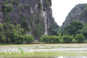 The 8-day tour is arranged in the northern Trekking Vietnam taking you to some of the most popular travel places including Mai Chau, Cuc Phuong National park and Tam Coc. The tour begins with a car transfer from Hanoi to Mai Chau where you spend the first 6 days trekking through local hilltribe villages such as Xa Linh, Hang Kia, Tau Na, Cun Pheo, Xam Khoe, Poom Coong, Noong Luong, Ban My. The first 5 nights are spent at local home (homestay) offering the opportunity to experience the real…