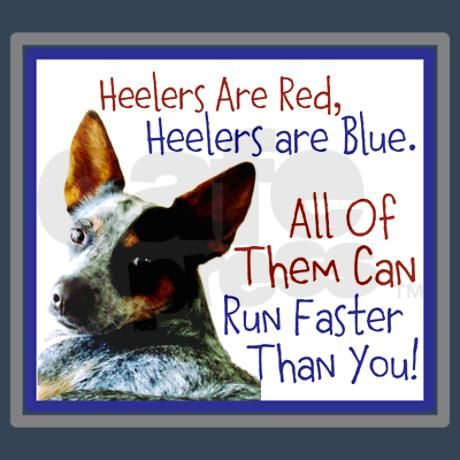 Heelers are Red, Heelers are Blue...