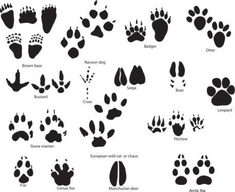Animal Paw Print Tattoo Designs