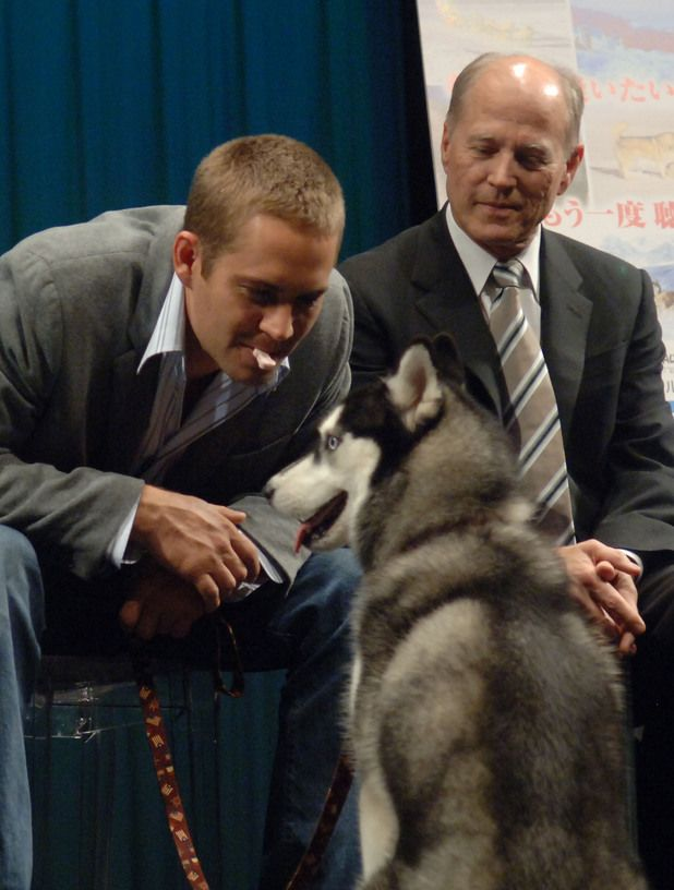 Eight Below - Paul Walker 1973-2013: Fast & Furious star's life ...