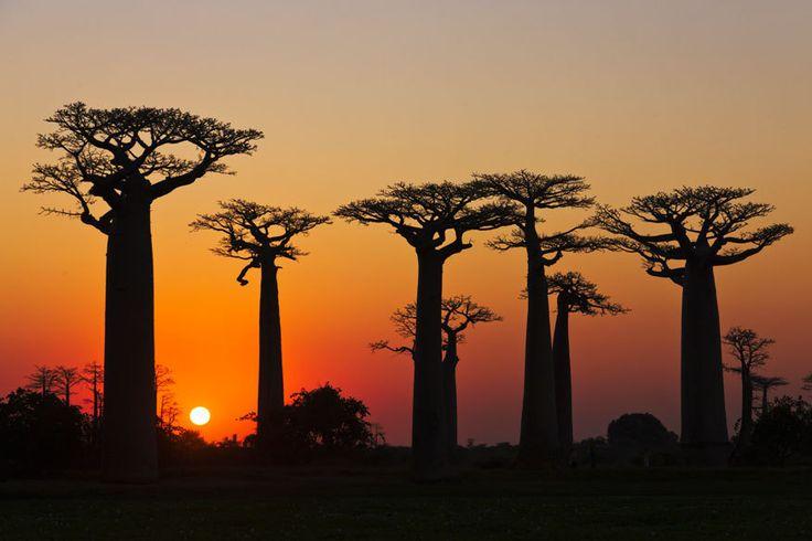 Madagaskar http://www.travelbook.de/welt/naturwunder-orte-bei-denen-man-wow-sagt-301837.html