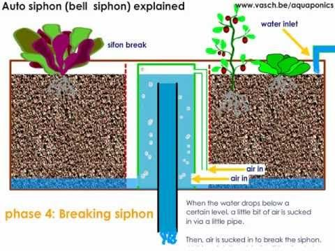 ▶ Aquaponics Auto Siphon or Bell Siphon - YouTube