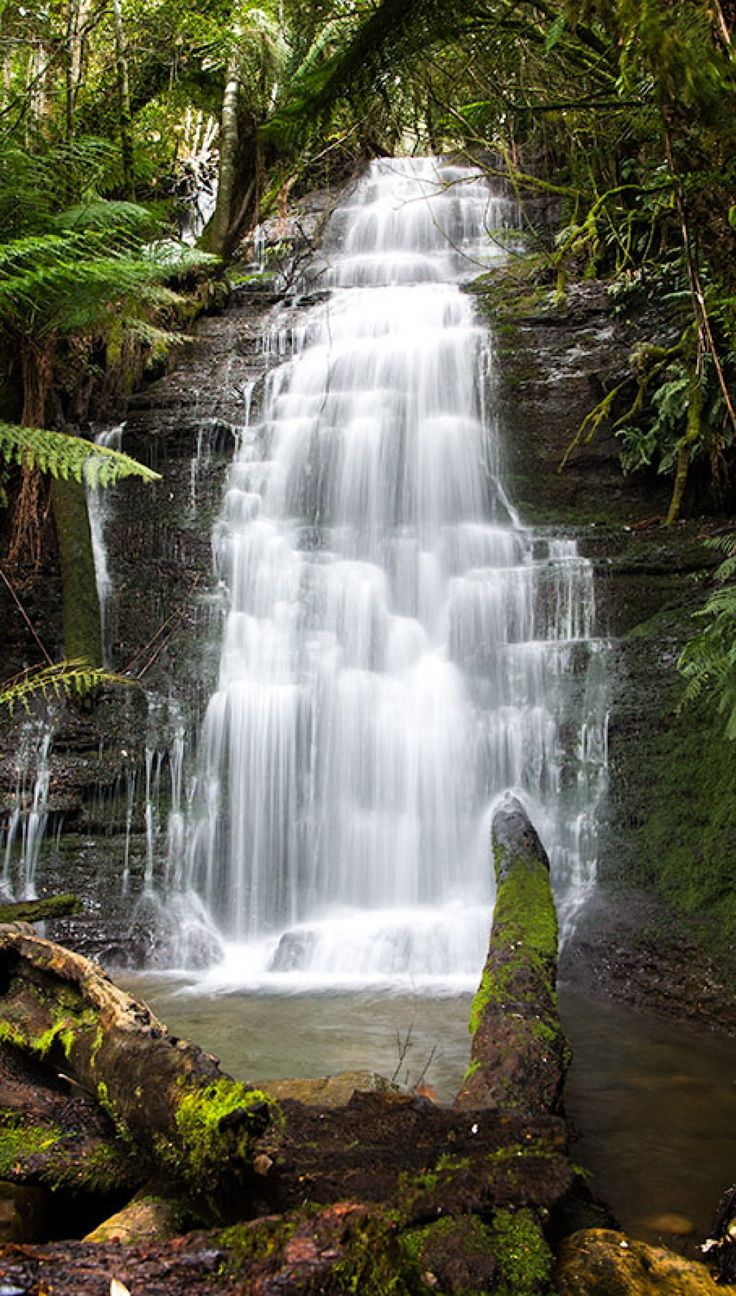 Westmoreland Falls, Mole Creek, Tasmania.  A stunning waterfall in a truly beautiful rainforest setting.  A short drive from Mole Creek, Tasmania, with a hike of about 45 minutes from the carpark to the waterfall.