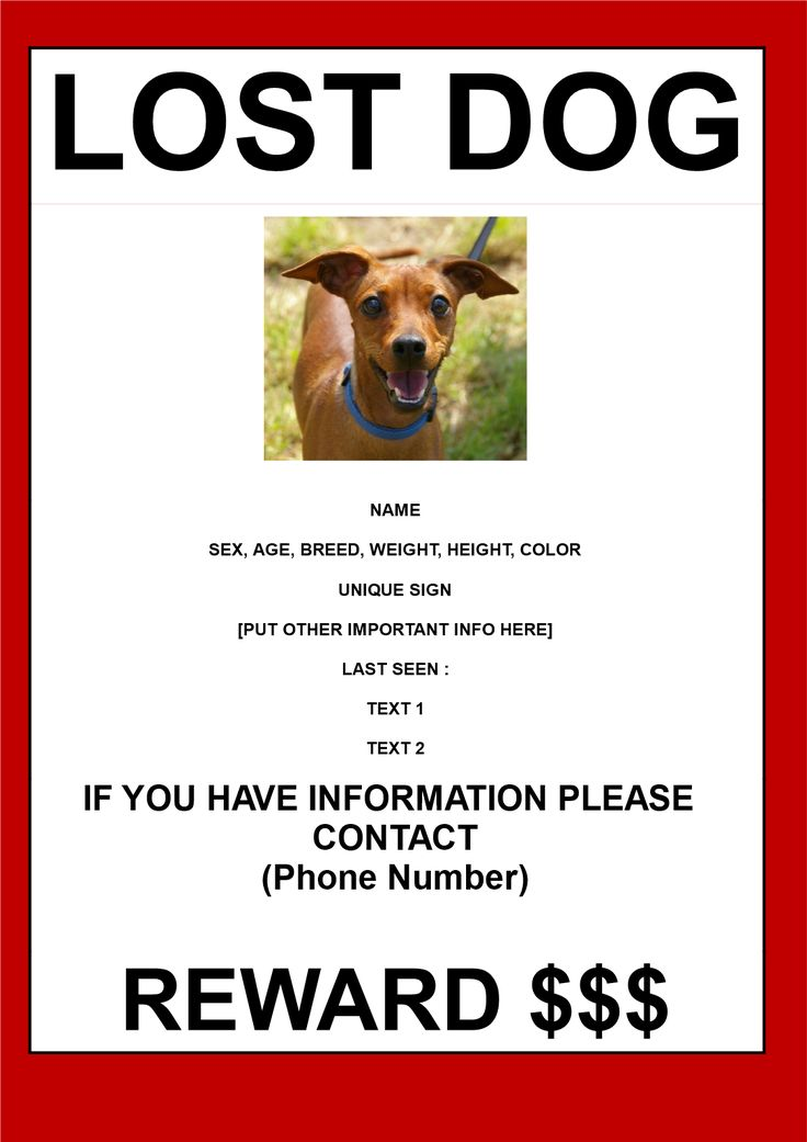 find lost dog poster in a3 size