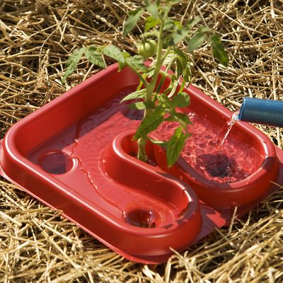 Automators grow healthier Tomato plants by suppressing weeds, protecting from cutworms, deliver water to the root zone and bright red color helps too.
