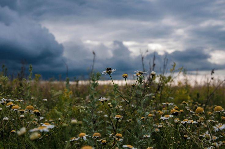 Прекрасные поля в Марий-Эл