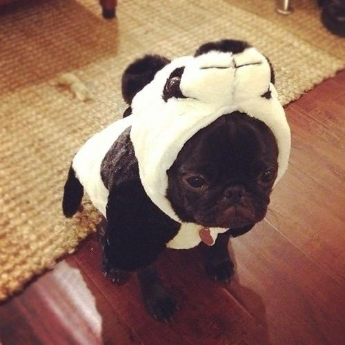Im a Panda. - Imgur
