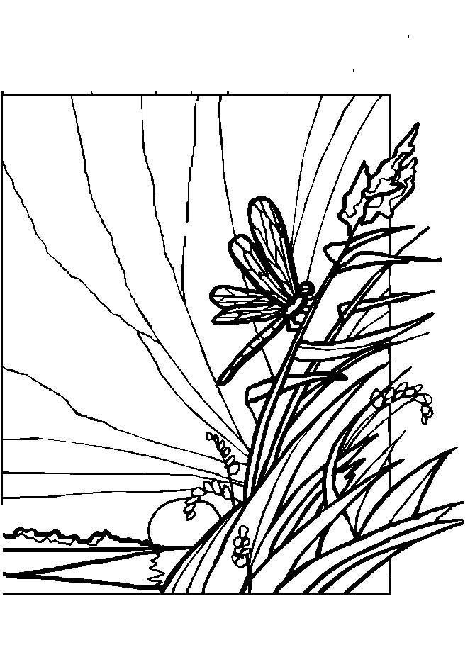 Bug Badge Coloring pages dragonflies