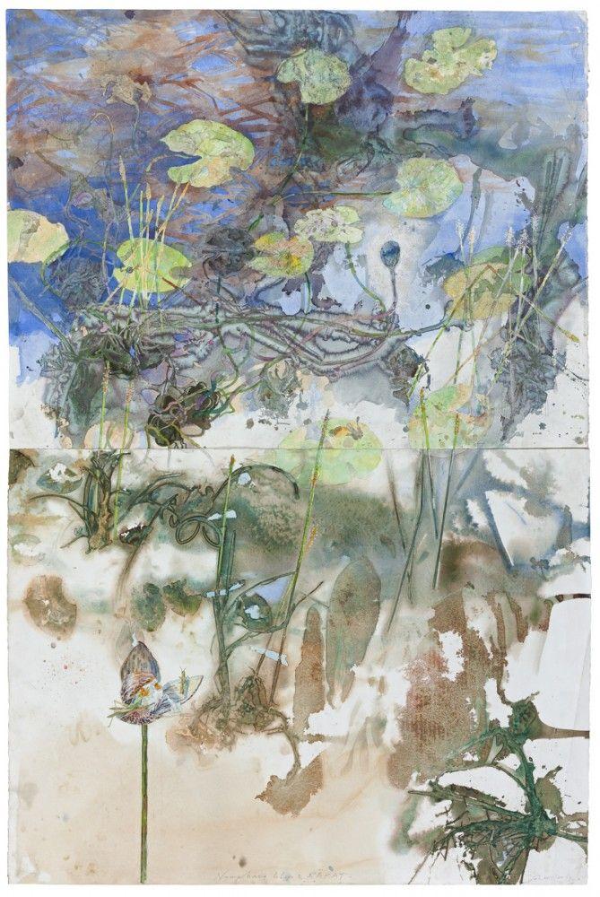 Nymphaea Lilies and Rakay by John Wolseley 2015