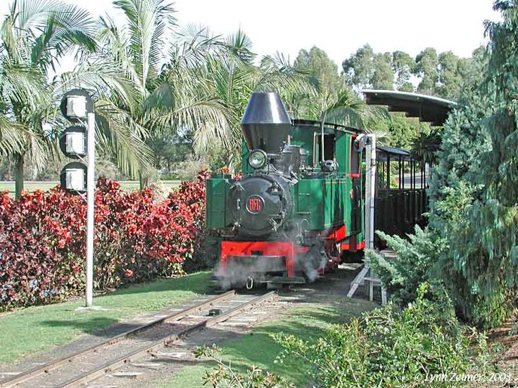Sugarcane Rail at Botanic Gardens