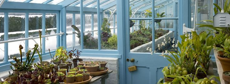 The hothouse - see the carnivorous plants and orchids at the home of Charles Darwin. SO MUCH YES!