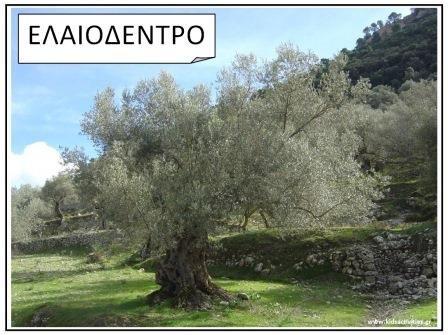 www.kidsactivities.gr ελια