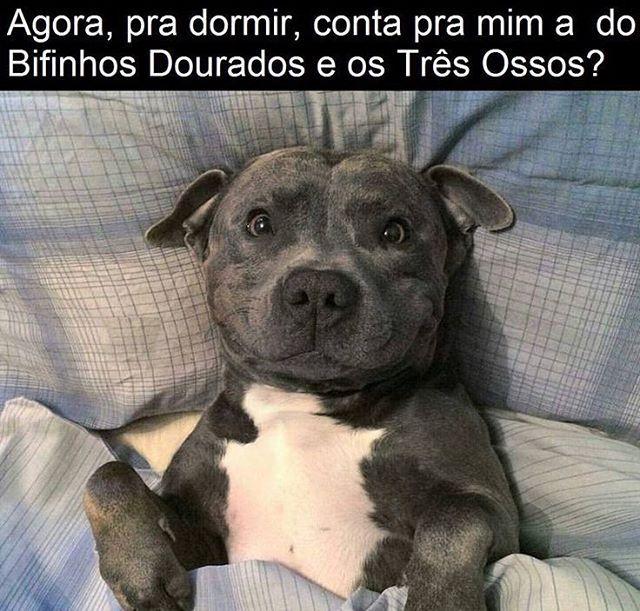 ❤ BOA NOITE! #petmeupet #cachorro #cachorro étudodebom #cachorroterapia #caopanheiro #filhode4patas #maedepet #maedecachorro #paidecachorro #boanoite