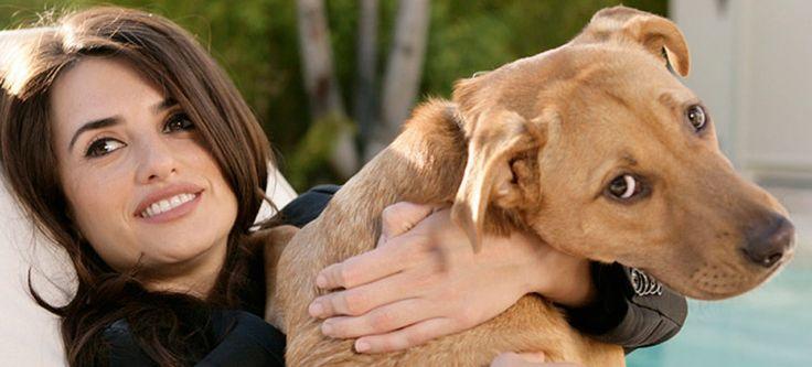 10 famosos que también adoptan animales abandonados