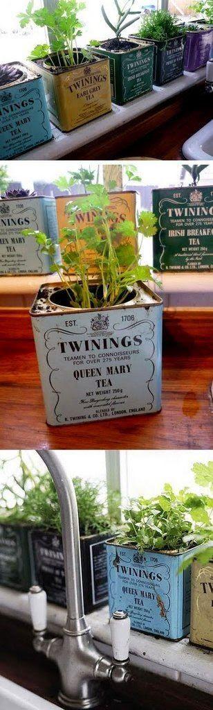 Cute Idea Foe Growing Herbs