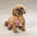Cute & cheap dog clothes