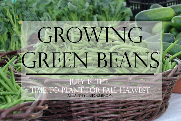 Growing Green Beans | 10 tips for growing green beans