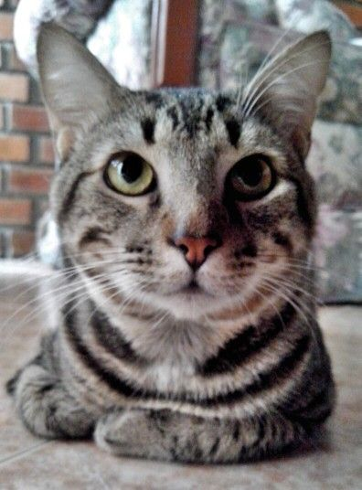Chispas... Grandmother's cat :3
