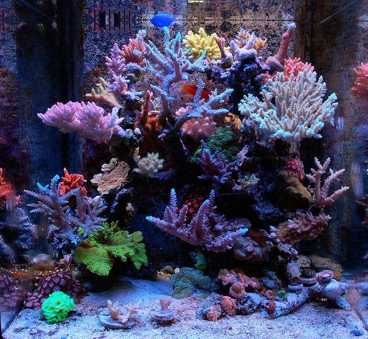 Lovely 207 Best Fish Tanks Images On Pinterest   Aquarium Ideas, Reef Aquarium And Saltwater  Aquarium