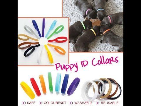 Ошейники для щенков .  Collars for pups .Товар с Aliexpress.