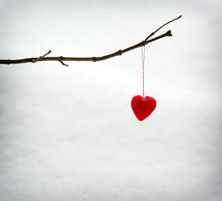 розы два сердечка на ветке картинка фотографии