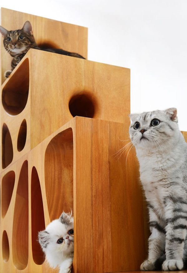 bloques-gatos-11
