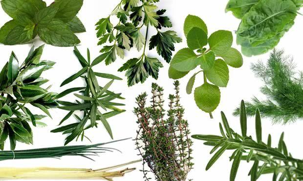 quelques herbes aromatiques  herbes & spices  Pinterest