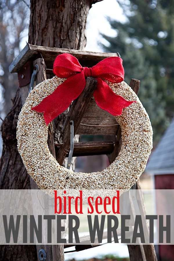 32 best images about bird feeders recipes on pinterest for Bird seed glue recipe