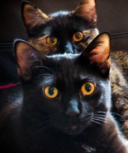 Best Animal Photobombs Images On Pinterest Funny Stuff - 20 hilarious cat photobombs