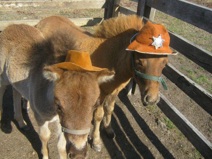 Andy & Arthur, hats.