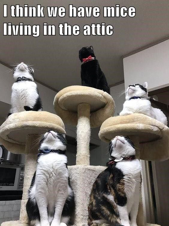 Pin By Holly Smith On Crazy Critters Funny Cute Cats Funny Cats Cat Animal Pictures