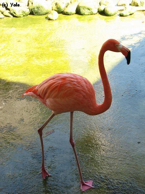 Lago Enriquillo Republica Dominicana Flamingo
