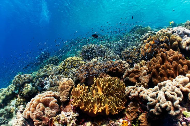 Legendary underwater explorer and conservationist, Jacques Cousteau, surely got it right: the waters of the Wakatobi Islands are truly an underwater nirvana.