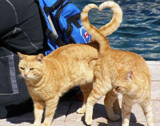 http://www.images-in-nation.com/chat-saint-valentin.html