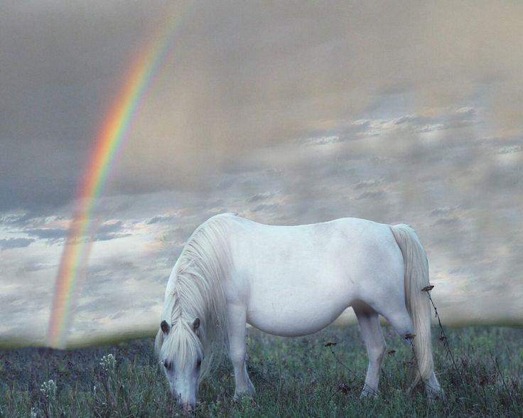 Secret pony mare