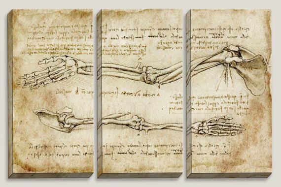 """Lazy Bones"" Medical Blueprint, Canvas Art, Anatomy, Doctor's Office Decor, Nurse Decor, School, Chiropractic Decor by Joelle Joy"