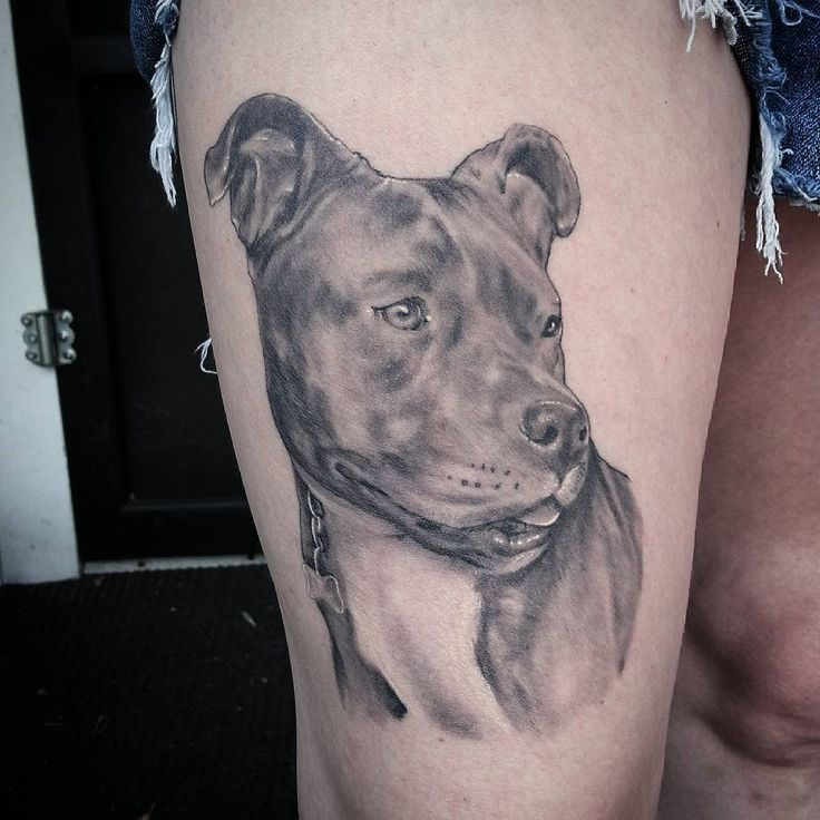 awesome Top 100 pitbull tattoos - http://4develop.com.ua/top-100-pitbull-tattoos/ Check more at http://4develop.com.ua/top-100-pitbull-tattoos/