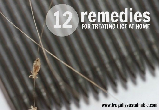 12 Ways To Treat Lice Naturally Without Harmful Chemicals-had to deal with this nightmare once when my firstborn was 6 and had a sleepover with friends after they returned from a vacation to the islands...nightmare, but we survived and so will you!