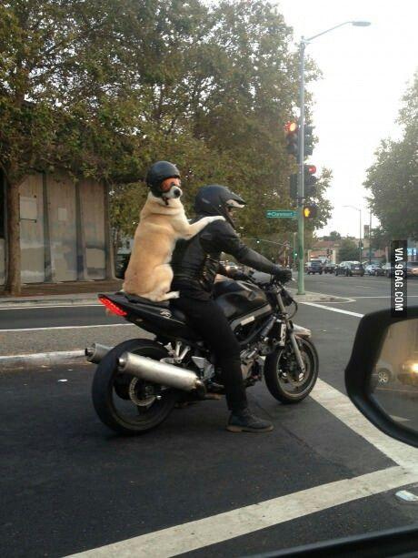 Take ride ?
