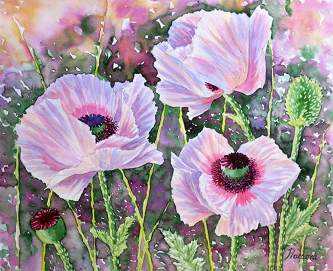 Pink Poppies