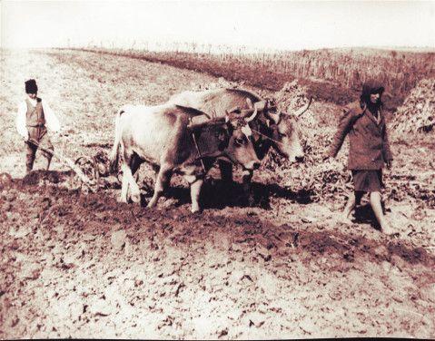 cooperativag.ro-satul-romanesc-archives