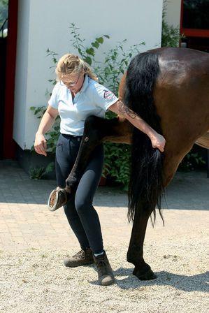 Legen Sie das Röhrbein des Pferdes gegen Ihren Oberschenkel und dehnen Sie das Bein vorsichtig, langsam und gerade nach hinten heraus. © JB Tierfoto / Cadmos
