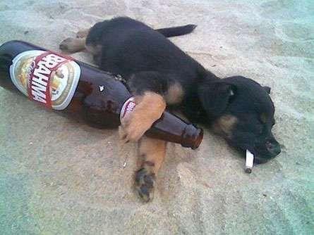 Vida de Mulambo: Por que ter cachorros ao invés de esposas? vidademulambu.blogspot.com445 × 334Pesquisa por imagem Você nunca precisa esperar por um cachorro, eles estão prontos para sair 24 horas por dia. 7. Cachorros acham engraçado quando você está bêbado.