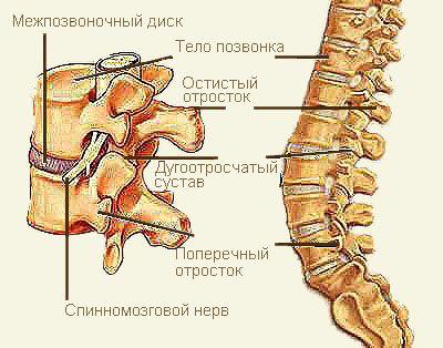 Йогатерапия позвоночника. Комплекс йога упражнений для самостоятельного избавления от боли. Полезная статья для тех, кто повредил спину и страдает от боли. При помощи упражнений, детально описанных и проиллюстрированных в данной статье, можно самостоятельно избавиться от болезненный ощущений в пояснице, а так же укрепить мышцы спины и живота для предотвращения проблем в будущем. Можно охарактеризовать эти […]