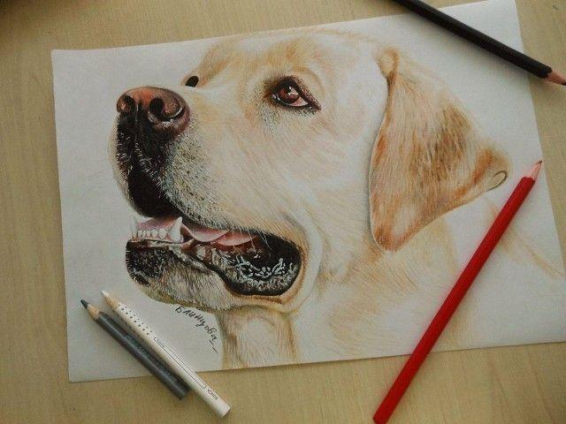 реалистичные рисунки животных: 16 тыс изображений найдено в Яндекс.Картинках