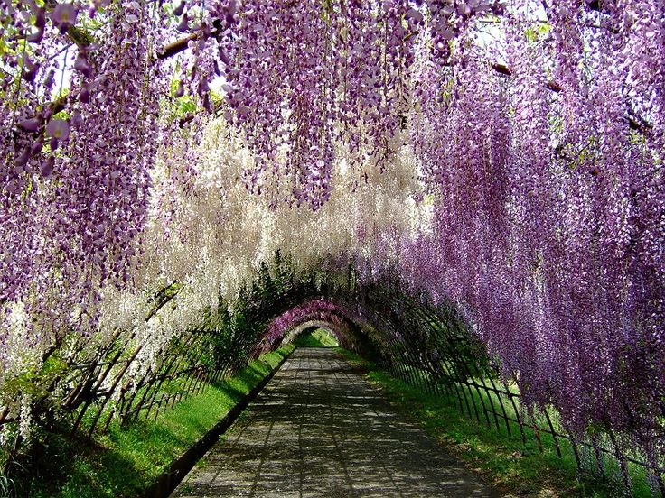 Can't wait to go Japan! :)
