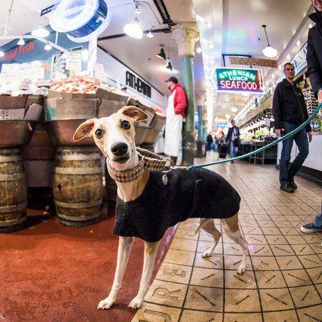 Elias Friedman fényképész kifejezetten abból a célból utazik, hogy különböző kutyákat fotózzon a földkerekség más-más pontjain. A képen látható 18 hónapos Sammy-t a seattle-i Pike Place Marketen kapta le.