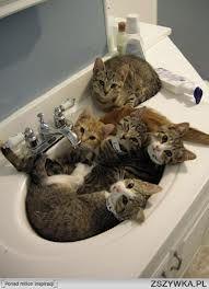 pięć kotków