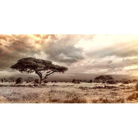 Obraz na płótnie - Afrykańskie drzewo - dostępny w rozmiarach 80x40, 120x60 #fedkolor #obraznapłótnie #obrazzezdjęcia #fotoobrazy #wydrukujzdjęcie #twojezdjęcie #Afryka #podróże #sawanna #drzewo #krajobraz #pejzaż #widok #sepia #sztuka #art #dekoracje #obrazy #naścianę #dopokoju #dosalonu #dosypialni #dobiura #pomysł #wnętrza